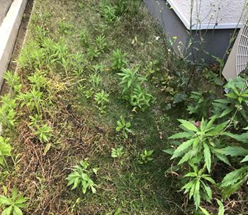 コンクリートに続いて、多いお悩みが「雑草」について。今回は、雑草対策をご紹介します。