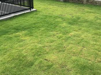 天然芝生には、お手入れ作業がたくさん。初めての方は小さなスペースからはじめてはいかがでしょうか。