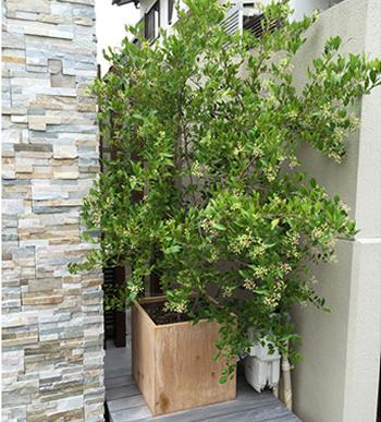 配管の多いところには、大きめのプランターに樹木を植えるという方法もあります。